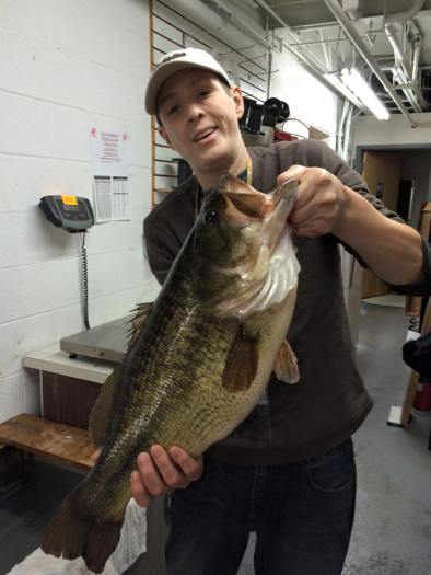 Spinnerbaits for big bass